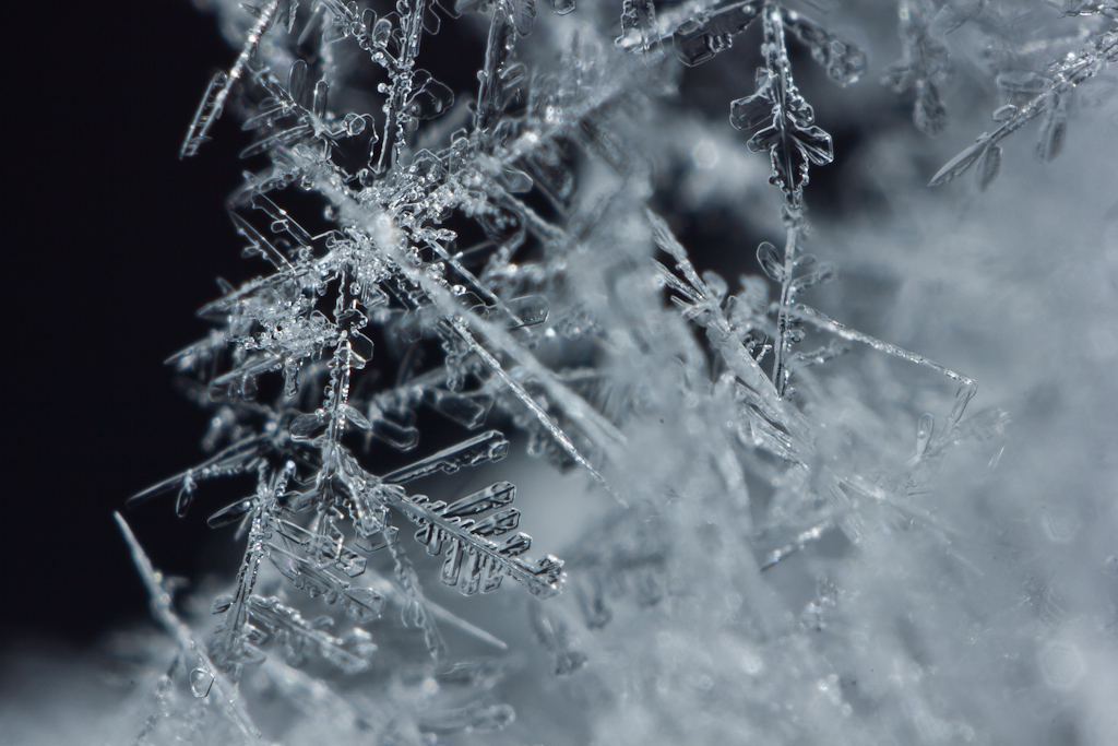 makro produkt fotografie schnee snowflake